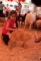 Petting Zoo girl OC Pet Expo 2