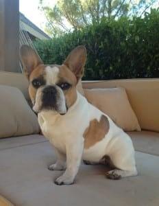 Pet Celebrity Stella