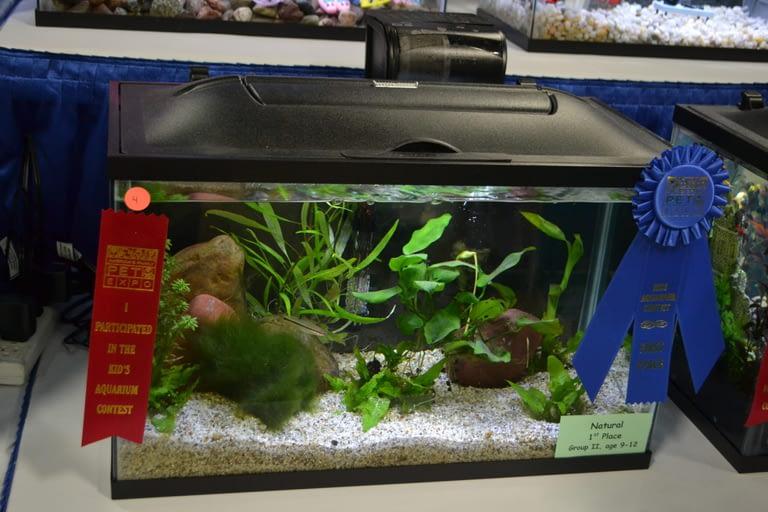 Kids Aquarium Contest Natural Group 2 1
