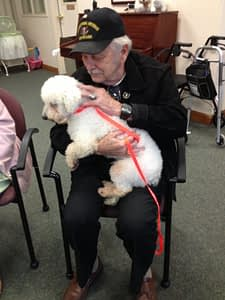 WAGS pet adoption