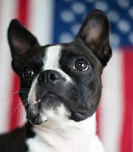 President's Day pets