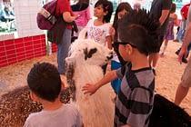 Petting Zoo Llama America's Family Pet Expo