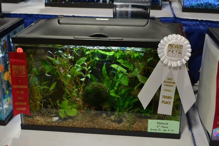 Kids Aquarium Contest Natural group 2 3
