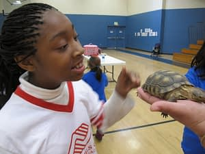 America's Family Pet Expo Turtle