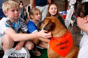 Pet Expo Adoptions
