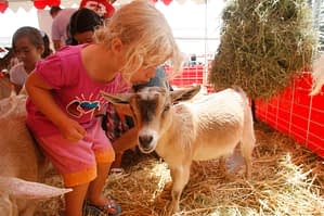 Petting Zoo, kids