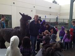 Llamarama! at Redlands Day Nursery