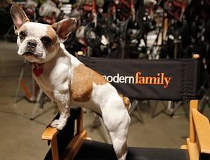 Stella, America's Familt Pet Expo