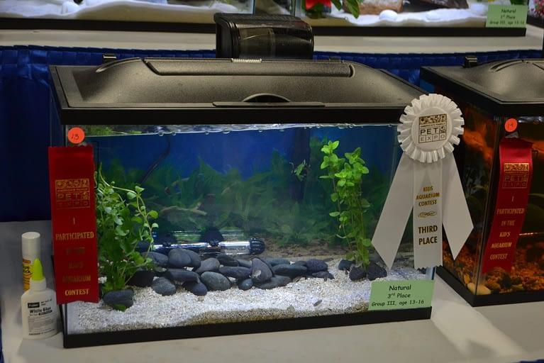 Kids Aquarium Contest Natural group 3 3